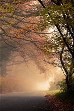 Preview iPhone wallpaper Autumn, forest, trees, road, fog, leaves