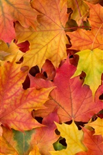 Preview iPhone wallpaper Autumn, maple leaves, red yellow and green