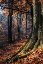 Preview iPhone wallpaper Autumn nature forest, red leaves