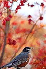 Preview iPhone wallpaper Autumn, trees background, bird