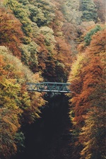 Preview iPhone wallpaper Autumn, trees, bridge, river