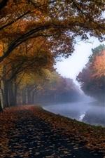 Preview iPhone wallpaper Autumn, trees, foliage, river, haze