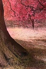 Preview iPhone wallpaper Autumn, trees, grass, nature scenery