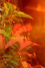 Autumn, web, sunlight, glare