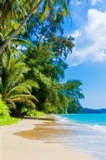 Praia, palmeiras, mar azul, céu, nuvens, tropicais