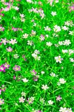 Schöne oxalis Blumen Feld, grüne Blätter