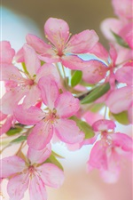 Preview iPhone wallpaper Beautiful pink apple flowers, twigs, spring