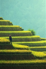 Preview iPhone wallpaper Beautiful rice terraces, China, countryside, greens, hut