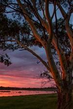 Big Swamp, Australia, water, trees, sunset
