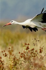 Preview iPhone wallpaper Bird of stork flight