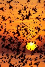 Preview iPhone wallpaper Birds sky, sunset