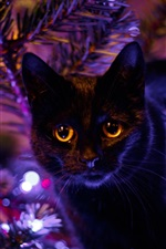 Preview iPhone wallpaper Black cat, eyes, lights, holiday