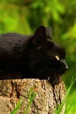 Preview iPhone wallpaper Black cat rest, stump, flowers