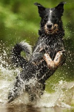 Preview iPhone wallpaper Black dog run in water