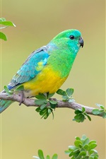 Preview iPhone wallpaper Blue-rumped parrot