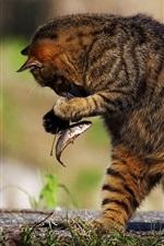 Preview iPhone wallpaper Cat eat fish