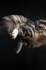 Preview iPhone wallpaper Cat jumping moment, black background