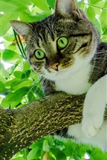Preview iPhone wallpaper Cat on tree, green foliage
