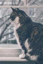 Cat sit at windowsill, window, gerbera flowers