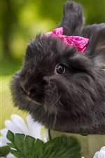 Preview iPhone wallpaper Cute black rabbit, pets