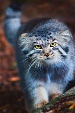 Cute cat look at you, yellow eyes