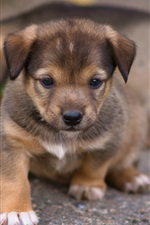 Preview iPhone wallpaper Cute puppy front view, look, ground