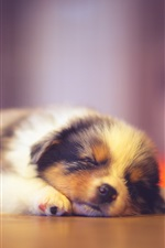 Preview iPhone wallpaper Cute puppy sleeping, bokeh