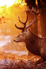 Preview iPhone wallpaper Deer, forest, trees, sun rays, glare