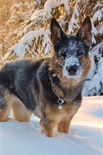 Preview iPhone wallpaper Dog standing in the thick snow