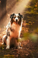 Preview iPhone wallpaper Dog under sunshine, forest, sun rays