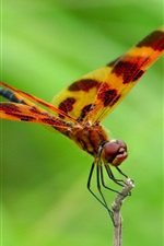 Preview iPhone wallpaper Dragonfly, green background