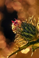 Preview iPhone wallpaper Flower bud macro photography, glare