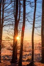 Preview iPhone wallpaper Forest, trees, autumn, sun rays, sunrise, morning