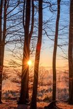 미리보기 iPhone 배경 화면 숲, 나무, 가을, 태양 광선, 일출, 아침
