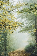 Preview iPhone wallpaper Forest, trees, foliage, fog, trail