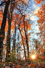 Vorschau des iPhone Hintergrundbilder Wald, Bäume, Blätter, Sonnenstrahlen, Blendung
