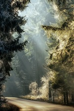 Preview iPhone wallpaper Forest, trees, road, sunlight