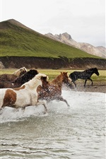 Preview iPhone wallpaper Freedom horses running in water