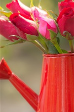 Preview iPhone wallpaper Fresh red roses, water pot
