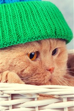 Preview iPhone wallpaper Funny animal, cat, basket, hat