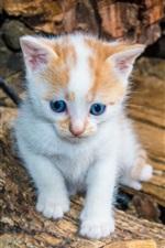 iPhone fondos de pantalla Gatito peludo, ojos azules