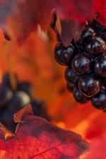 Preview iPhone wallpaper Grapes, red leaves, autumn