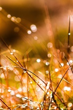 Preview iPhone wallpaper Grass after rain, water drops