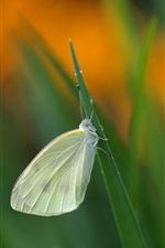 Preview iPhone wallpaper Grass, little butterfly