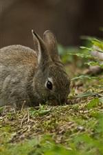 Preview iPhone wallpaper Gray rabbit, grass