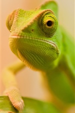Preview iPhone wallpaper Green lizard face close-up, bokeh