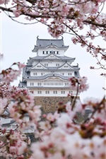 Preview iPhone wallpaper Himeji castle, sakura, Japan