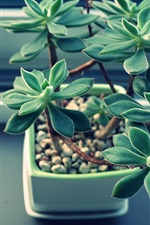 Preview iPhone wallpaper Houseplant, succulent plants, leaves