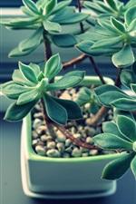 미리보기 iPhone 배경 화면 실내 식물, 즙이 많은 식물, 잎
