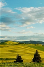 Preview iPhone wallpaper Italy, Tuscany, trees, greens, fields, hills